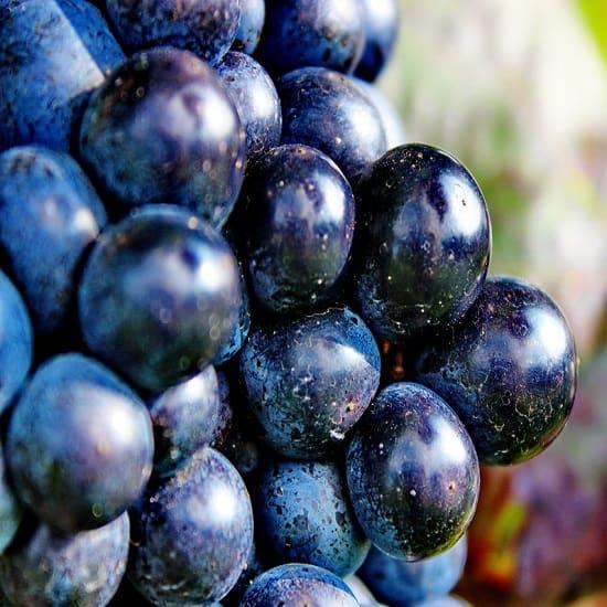 Gi-Tagged-Bangalore-Blue-Grapes