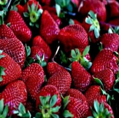 Gi-Tagged-mahabaleshwar-strawberry