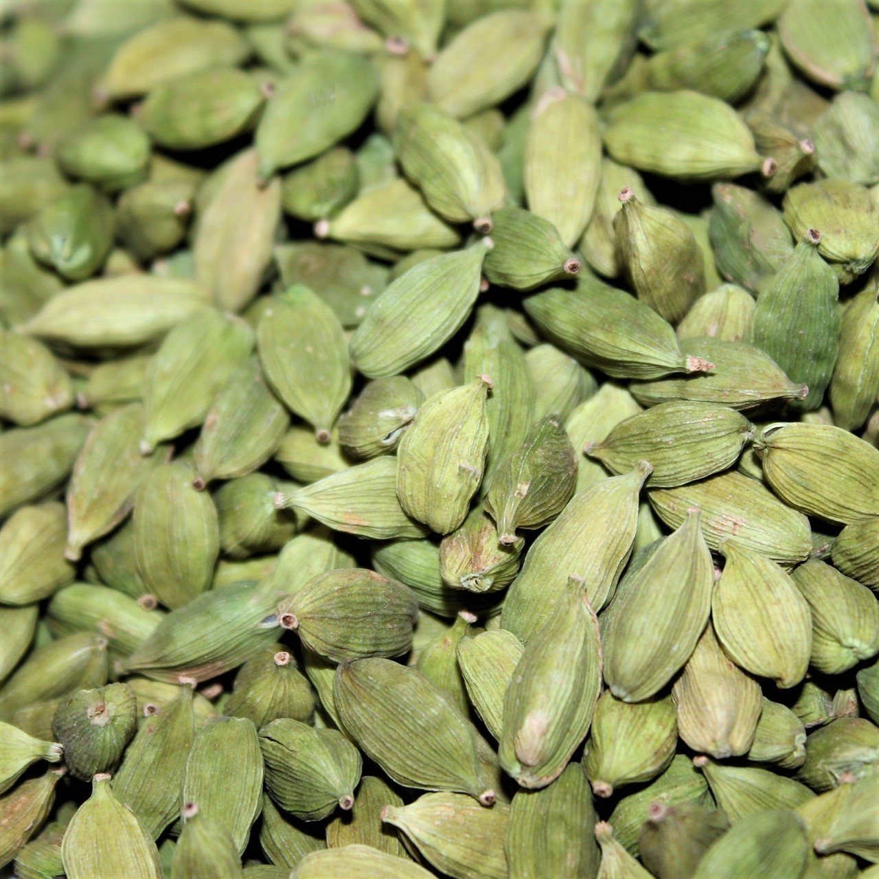 alleppey green cardamom gitagged ethical spice store